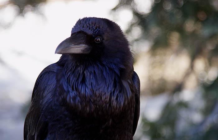 Birds 13