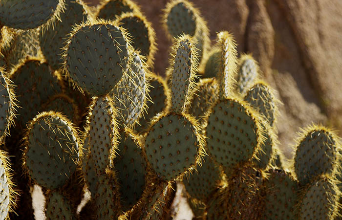 Cactus 06