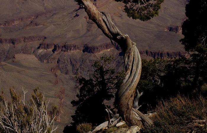 Canyon 12