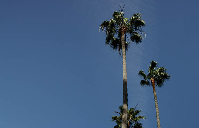 Palm Trees 02
