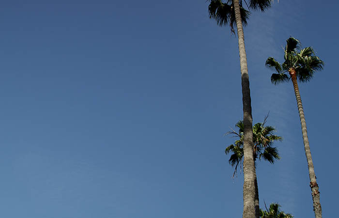Palm Trees 03