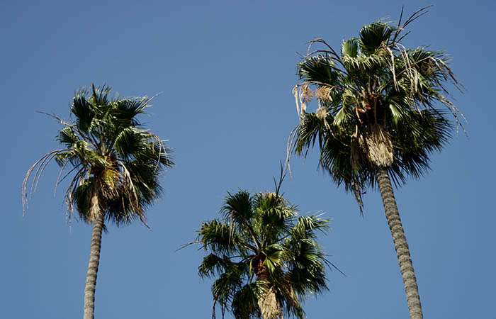 Palm Trees 04