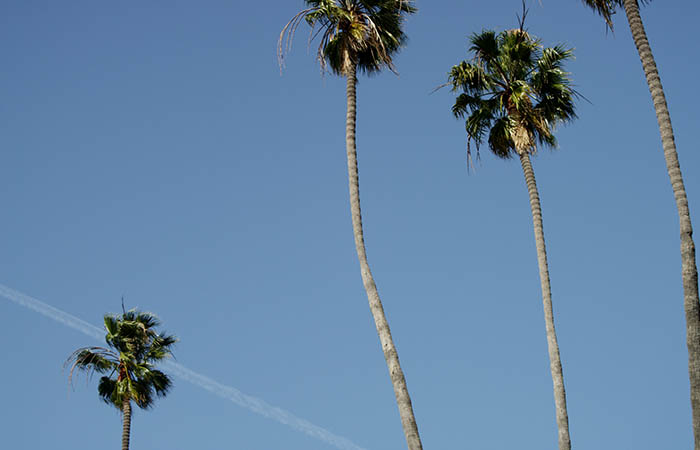Palm Trees 05