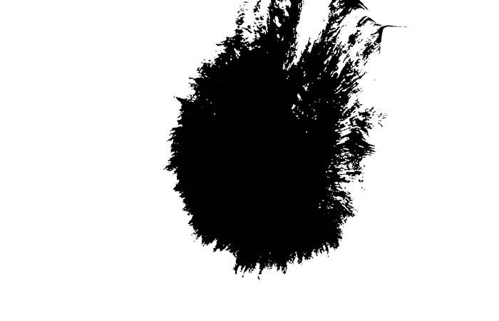 ProRes – Ink Bleed 8